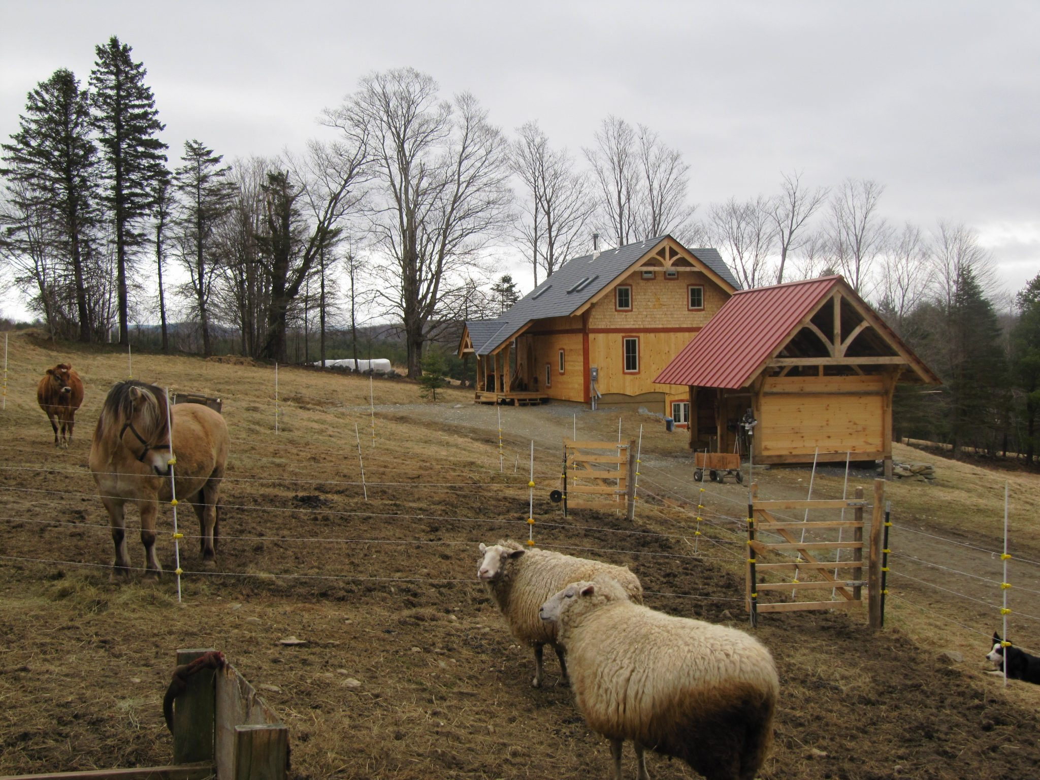 3 exterior - west with sheep - closer